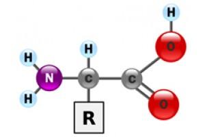 Как принимать аминокислоты?